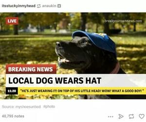 dog, lol, and tumblr image