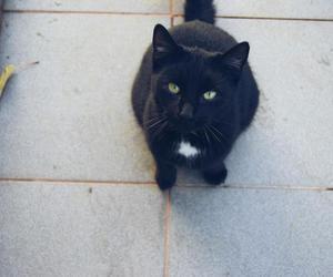 alternative, animals, and black cat image