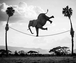elephant, animal, and funny image