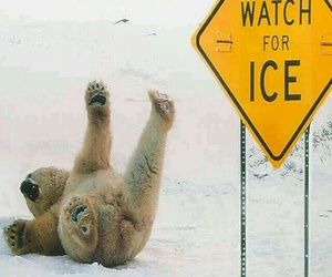bear, funny, and ice image