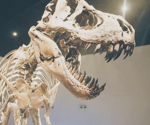 dinosaur, fossils, and museum image