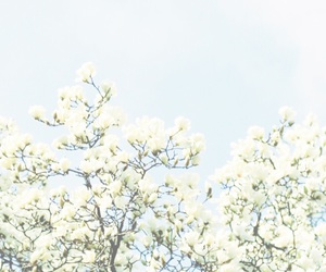 photography nature, soft white bright, and aesthetic beautiful image