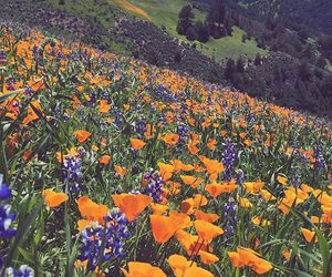 flowers, spring, and orange image