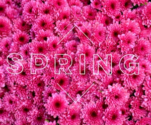 easter, pink, and flowers image