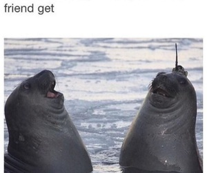 funny, joke, and friends image