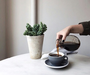 coffee, plants, and drink image