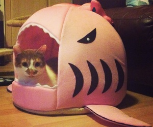 bed, funny, and kitten image