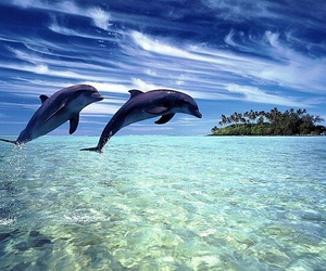 dolphin, water, and Island image