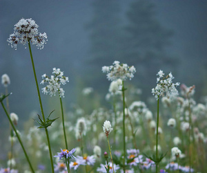 atmosphere, pacific northwest, and flowers image