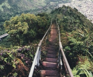 nature, photography, and stairs image