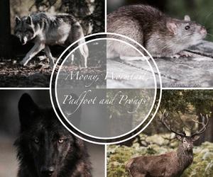 dog, harry potter, and hogwarts image