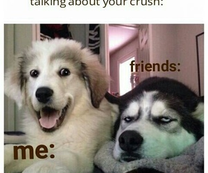 dogs and funny image
