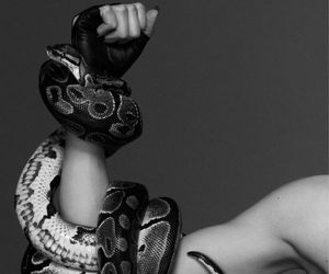 snake, black and white, and photography image