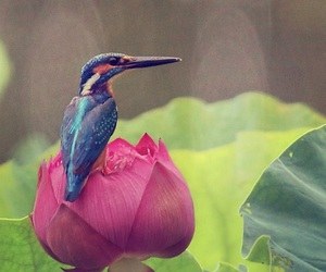 bird, nature, and aves image