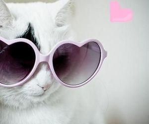 cat, cool, and glases image