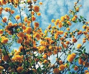 flowers, yellow, and sky image