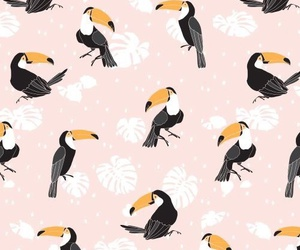 background, bird, and pattern image