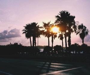 aesthetic, palmtrees, and shoah image
