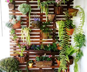 plants and home image