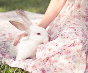 spring, bunny, and easter image