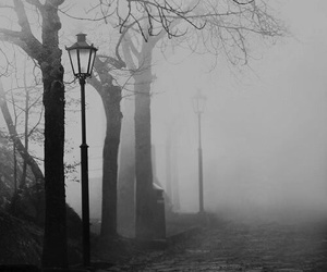 black and white, fog, and tree image
