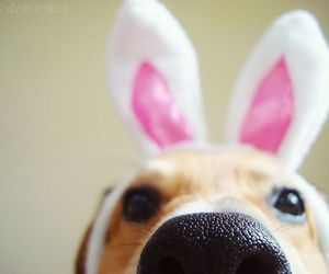 dog, bunny, and easter image