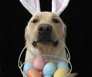 easter, dog, and cute image