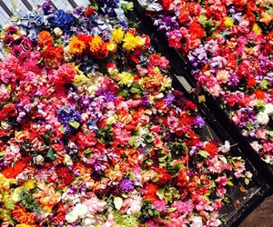 flowers, theme, and bright image