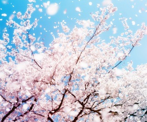flowers, background, and blossom image