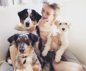 acacia brinley, dog, and animal image