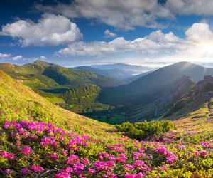 beautiful places, flowers, and mountains image