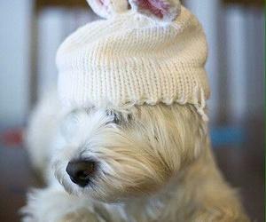 dog, easter bunny, and white dog image