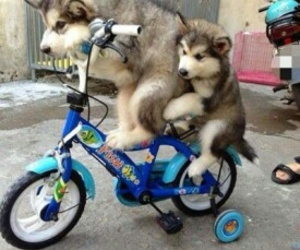 dogs, bikers, and fun image