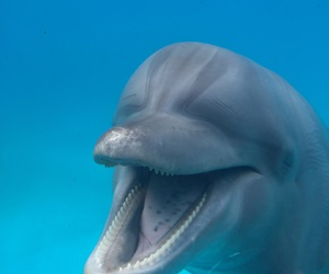 beautiful, blue, and delfin image