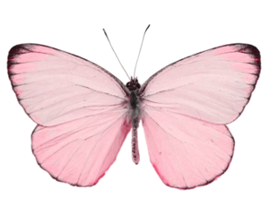 butterfly, pink, and transparent image
