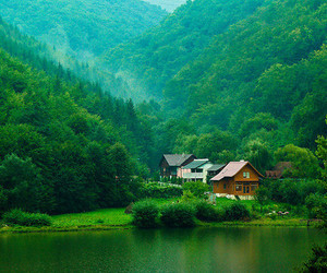 nature, green, and forest image