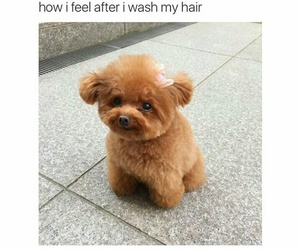 dog, hair, and funny image