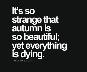 quotes, autumn, and beautiful image
