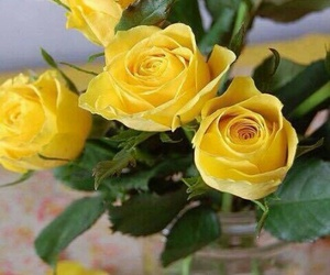 natural, roses, and yellow image