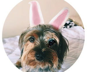 dog, easter, and Freddie image