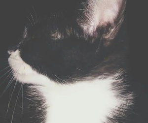 black & white, cat, and kitty image