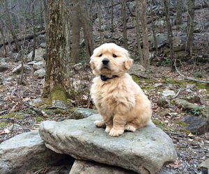 adorable, dog, and nature image
