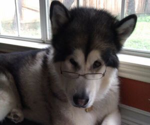 dog, funny, and book image