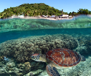turtle, nature, and landscape image