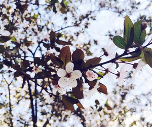 blossom, peach, and china image