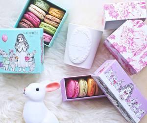 rabbit and sweet image