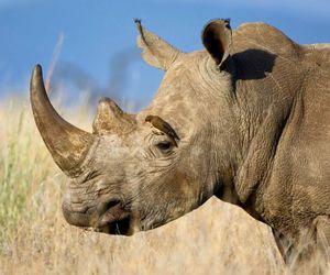 bird, africa, and rhinoceros image
