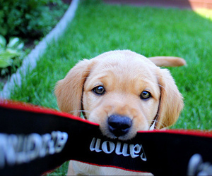 dog, cute, and canon image