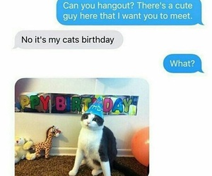 funny, cat, and birthday image