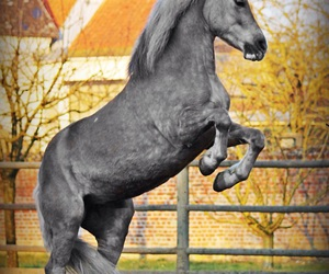 black and white, cheval, and colors image